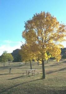 autumn_leaves_imagelarge